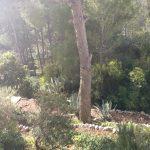el_jardin